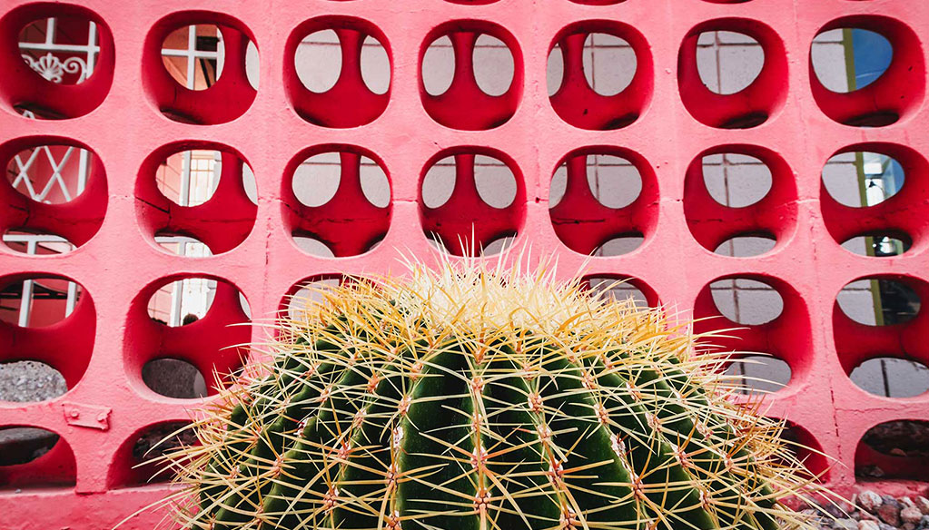 cactus in front of pink wall